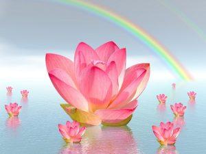 meditation flower